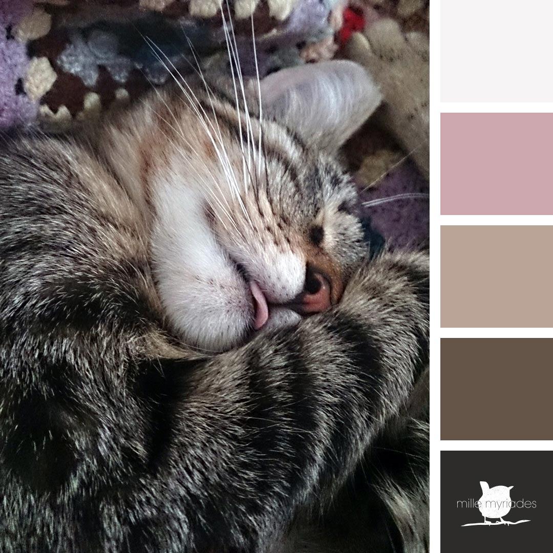 Palettes de couleurs – Minna, mon chat